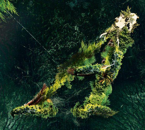 Valerinne - Arborescent