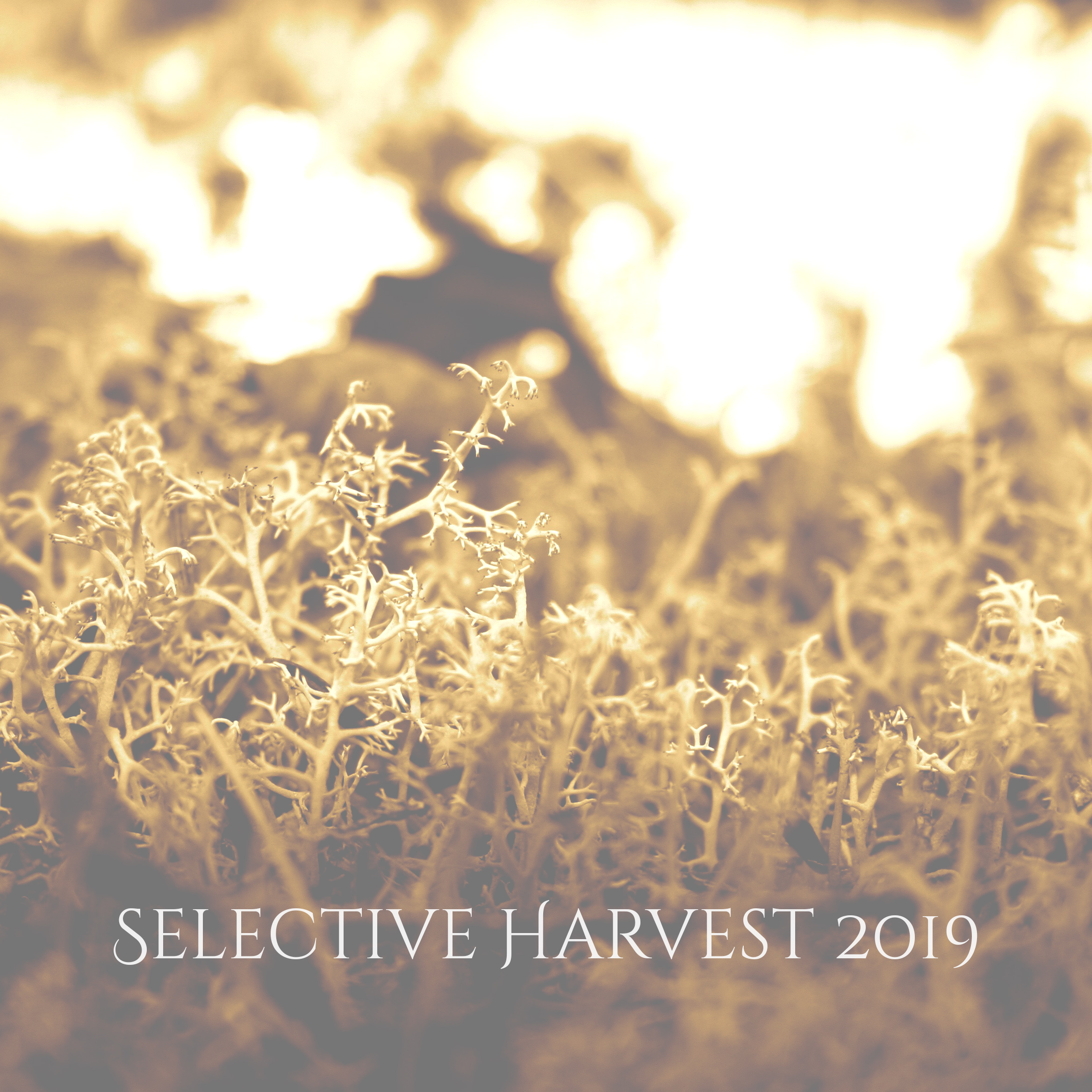 Selective Harvest - 2019